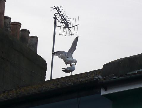 Seagulls on the roof by Jessica Spengler on Flickr