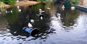 The bins in the pond this morning
