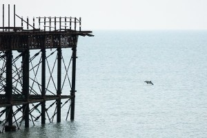 Dolphin swimming by the pier by Finn Hopson