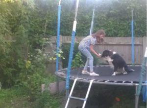 Ziggy the bouncy dog