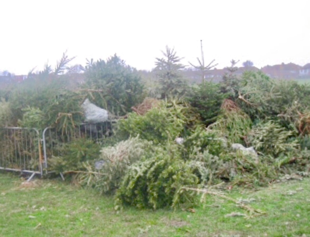 Brighton And Hove News » Christmas Tree Recycling Points