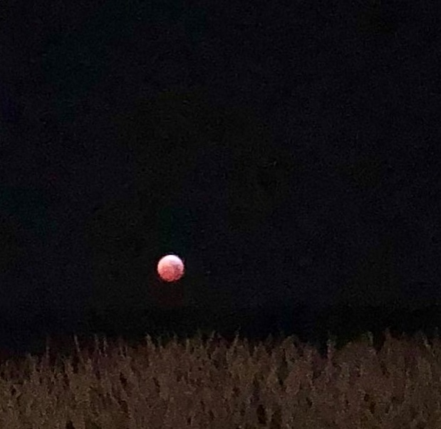 blood moon viewing brighton - photo #22